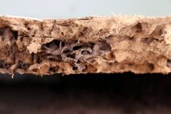 Гнездитесь термит, предпосылка термита гнезда, поврежденное деревянное съеденного термитом или белый муравей стоковое фото rf