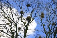 гнезди ворон Стоковые Фотографии RF