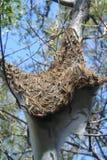 гнездй гусеницы Стоковые Изображения RF