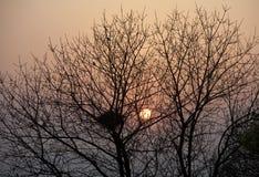 Гнездй дерева и птицы стоковые фотографии rf