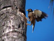 гнездй кокоса Стоковое фото RF