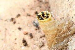 Гнездй насекомого Стоковые Фото