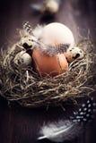 гнездй пасхи деревенское Стоковые Фото