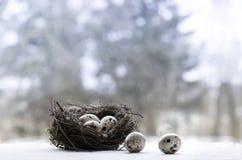 Гнездй пасхи с яичками триперсток Стоковая Фотография RF