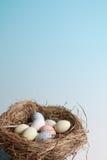 гнездй пасхи Стоковое фото RF