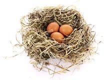 Гнездй птицы при 3 изолированного яичка Стоковые Изображения RF