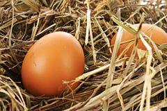 Гнездй птицы при 3 изолированного яичка Стоковая Фотография