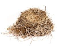 гнездй птицы Стоковое Изображение RF