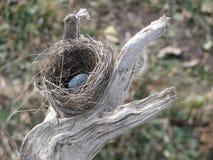 гнездй птицы Стоковая Фотография