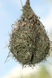 гнездй птицы Стоковая Фотография RF