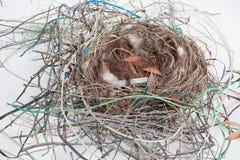 гнездй птиц Стоковое Фото