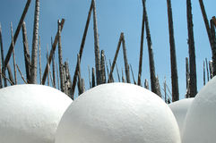 гнездй птиц Стоковое фото RF
