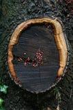гнездй черепашки Стоковое Изображение RF