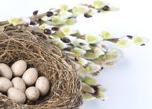 гнездй яичек птиц Стоковое фото RF