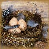 гнездй яичек Стоковые Изображения