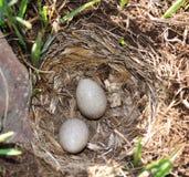 гнездй яичек Стоковые Фото