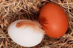 гнездй яичек стоковое фото