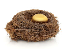 гнездй яичка золотистое Стоковые Фото