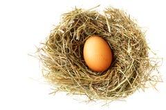 гнездй яичка Стоковое Изображение