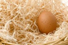 гнездй яичка Стоковые Фотографии RF