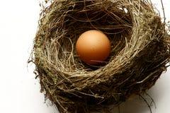 гнездй яичка Стоковое Фото