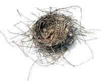 гнездй 08 птиц Стоковое Фото
