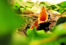 гнездй 2 Стоковое Изображение RF