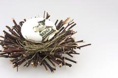 гнездй 4 яичек Стоковые Фотографии RF
