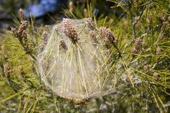 гнездй crawlers Стоковые Фото