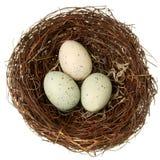 гнездй eco принципиальной схемы птицы содружественное Стоковое фото RF