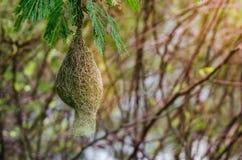 гнездй s птицы Стоковая Фотография RF
