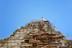 Гнездо аиста на старой немецкой церков фото Украина Стоковое фото RF