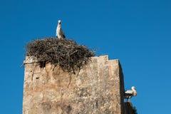 Гнездо и 2 аиста Стоковое Фото