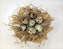 Гнездо и яичка стоковые изображения rf