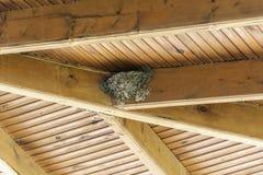 Гнездо ласточки на крыше стоковая фотография