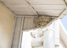 Гнездо ласточки на стене стоковая фотография rf