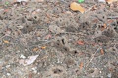 Гнездо муравьев живя ОН нелегально стоковое изображение rf