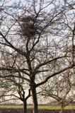 Гнездо птицы в дереве Стоковые Изображения RF