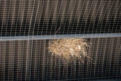 Гнездо птицы на крыше Стоковая Фотография RF
