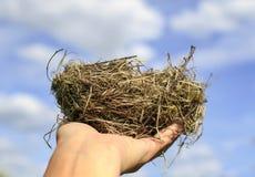 Гнездо птицы небольших ветвей лежит на протягиванном agai ладони стоковое изображение