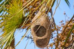 Гнездо птицы портноя под конструкцией Стоковые Фото