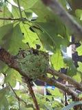Гнездо птицы припевать стоковое изображение rf