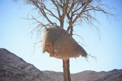 Гнездо птицы ткача Стоковое Изображение RF