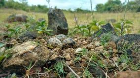 Гнездо птицы стоковое фото rf