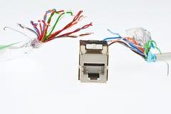 Гнездо сети RJ45 женское погнано 2 кабелями которое выглядеть как щупальца изверга, белой предпосылкой UTP/STP стоковое изображение rf