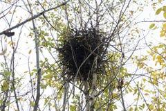Гнездо сидит на столбце на Риме, который объект около Священного города стоковые фото