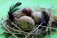 Гнездо с яйцами и пер триперсток на салатовой предпосылке стоковое изображение rf
