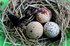 Гнездо с яйцами и пер триперсток на салатовой предпосылке стоковое изображение