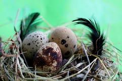 Гнездо с яйцами и пер триперсток на салатовой предпосылке стоковые изображения