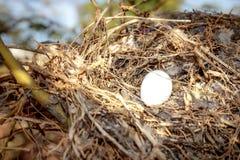 Гнездо ` s птицы в дереве Стоковая Фотография RF